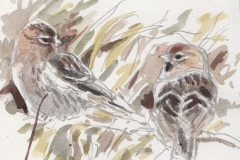 Bill Neill 	<i>Red Poll</i>	Watercolour	£38