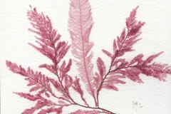 Vanessa Langley	<i>Rockpool</i>	Hand Pressed Seaweed	£20winter-49