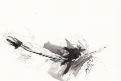 Maya Reid<i>North Uist Buzzard</i>Pencil, Graphite and Ink applied using a Feather£20