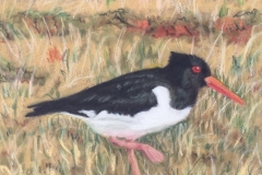 Sandra Hutton	<i>Oyster Catcher</i>	Pastel	£20inter-54