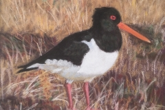 Sandra Hutton	<i>Oyster Catcher</i>	Pastel	£20