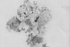 Fiona Pearson<i>Lichen Landscape</i>Graphite£75